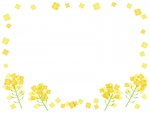 菜の花のフレーム飾り枠イラスト