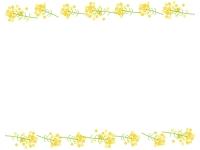 菜の花の上下フレーム飾り枠イラスト