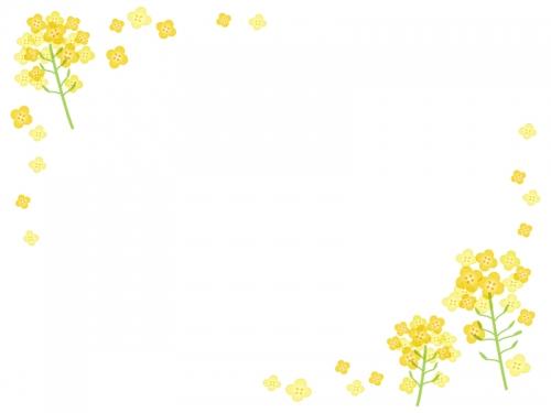 菜の花のフレーム飾り枠イラスト02
