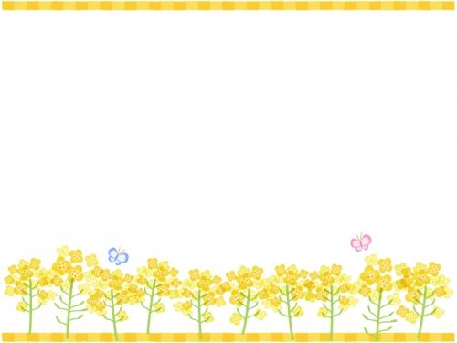 菜の花とちょうちょの上下フレーム飾り枠イラスト