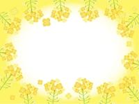 菜の花の黄色フレーム飾り枠イラスト