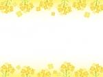 菜の花の黄色い上下フレーム飾り枠イラスト
